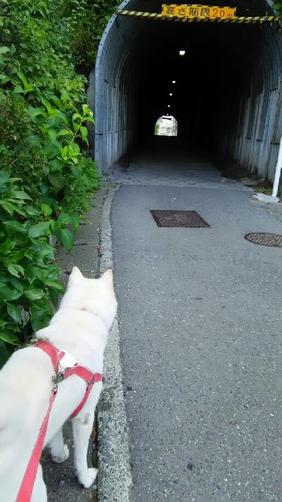 トンネル好き