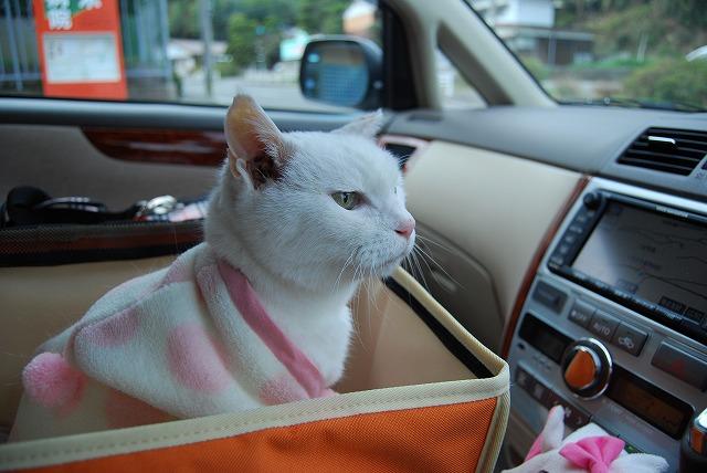 車のお出かけ好きばい!