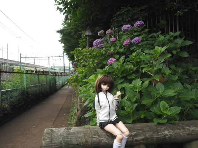 sumako24.jpg