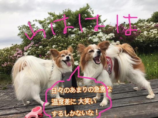 fc2blog_2017051120564696c.jpg