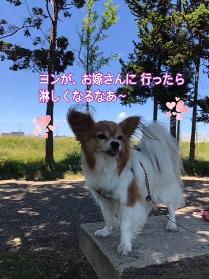 fc2blog_2017060521104740b.jpg