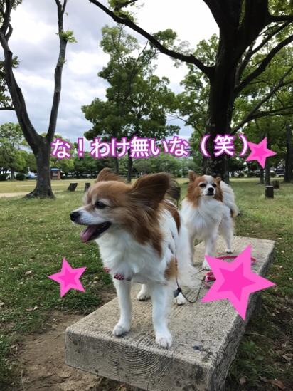 fc2blog_20170605211135c44.jpg