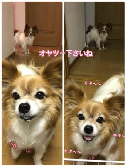 fc2blog_20170612212923236.jpg