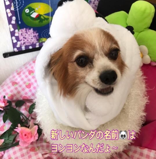 fc2blog_20170613212817df5.jpg