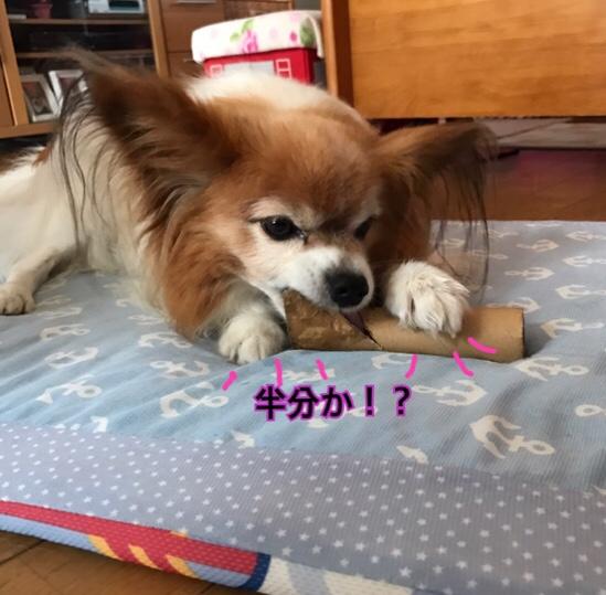 fc2blog_20170628213323598.jpg