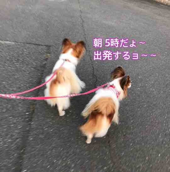 fc2blog_20170716201251bfe.jpg