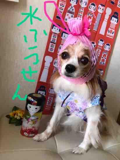 fc2blog_201709011102171cb.jpg