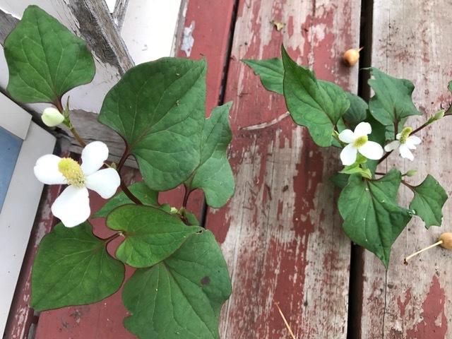 納品先の花