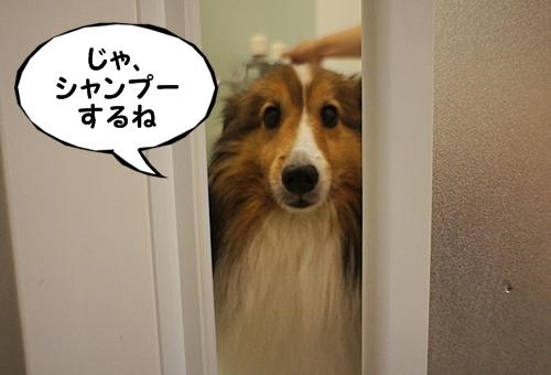 しゃんぷー2