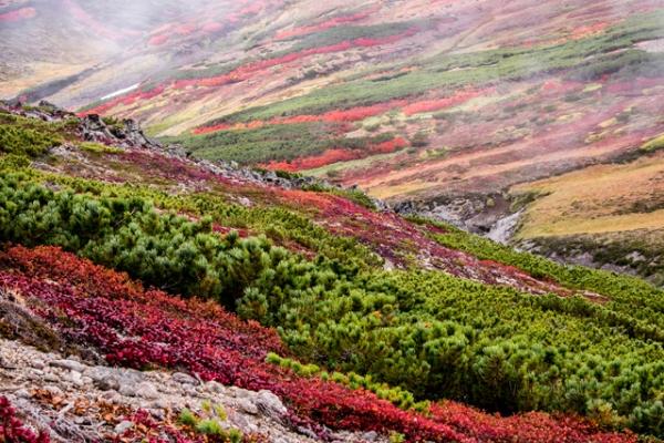 黒岳山頂紅葉-1