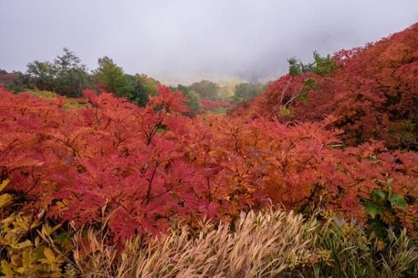 のぼり道の紅葉-1