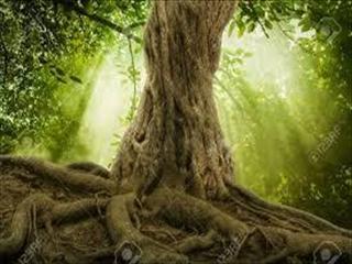 木の根_R