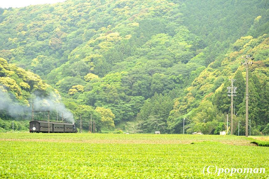 DSC_8750 - コピー2017 5 31 大井川鐵道 福用~大和田 コントラスト 871 580 popoman