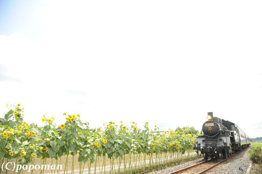 DSC_9577 - コピー2017 8 13 真岡鐡道 益子~七井 871 580 popoman