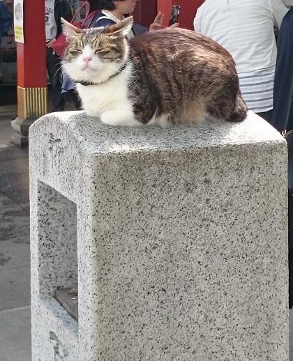 お百度参り猫