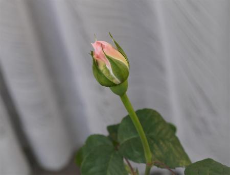 シャリファ・アスマ20140508