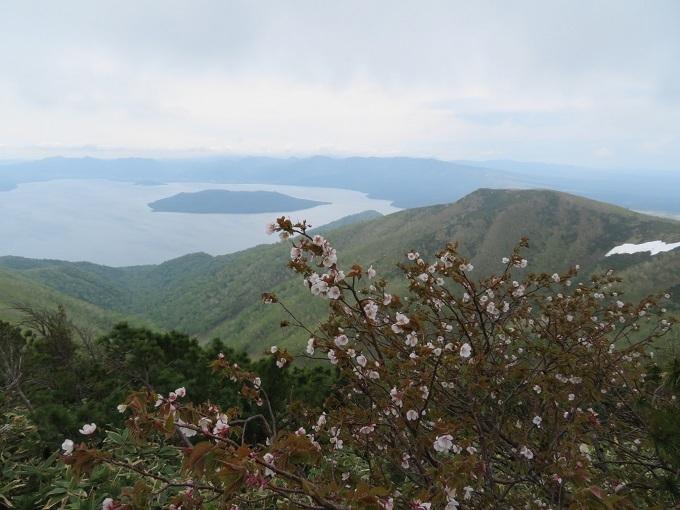 チシマザクラと屈斜路湖