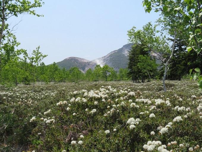 イソツツジと硫黄山 (2)