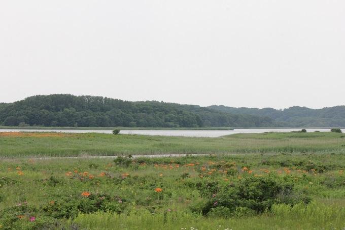 トウフツ湖とスカシユリ
