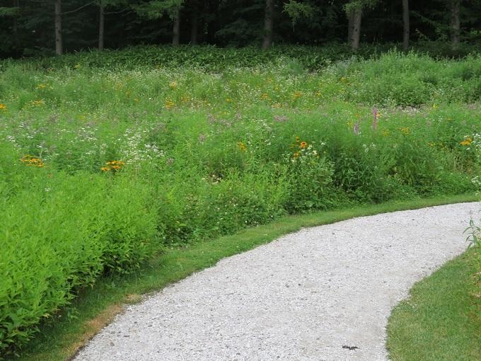 野の花の散策路