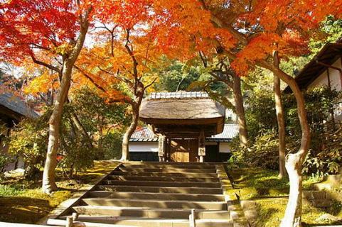 enkakuji-blog.png