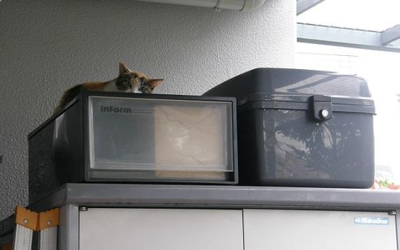 猫の雨宿り