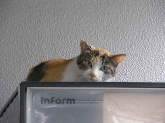 猫の雨宿り2