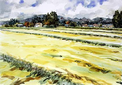 那須塩原の稲田2