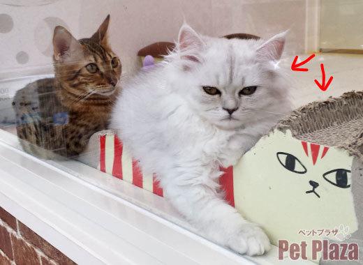 ペルシャとベンガル1