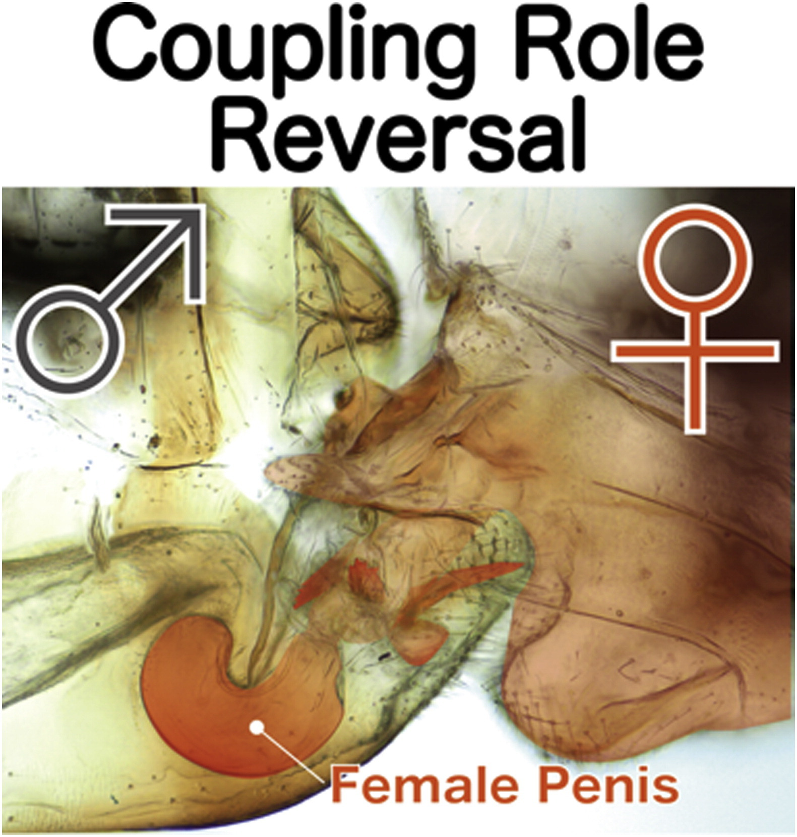 Male_penis and female_vagina