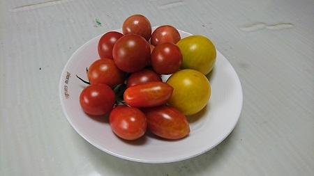 トマト 2017.7.2
