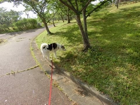 2017-05-26 散歩 004 (480x360)