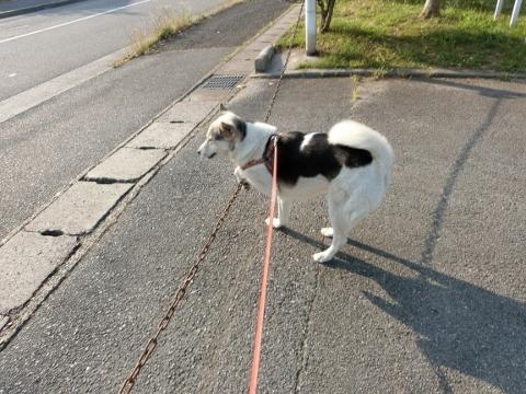 2017-06-19 散歩に~ 021 (480x360)