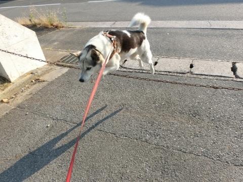 2017-06-19 散歩に~ 024 (480x360)