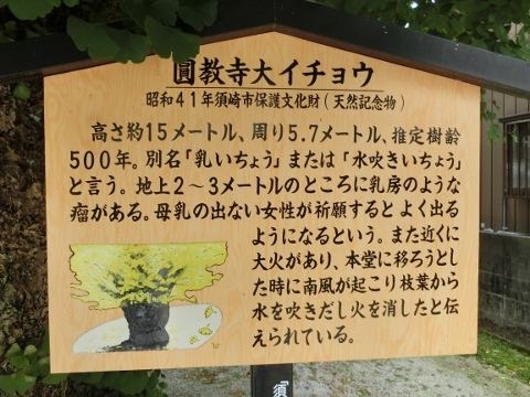 2017-06-24 高知 2 031 (480x360)