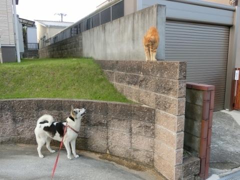 2017-07-13 散歩 猫 008 (480x360)