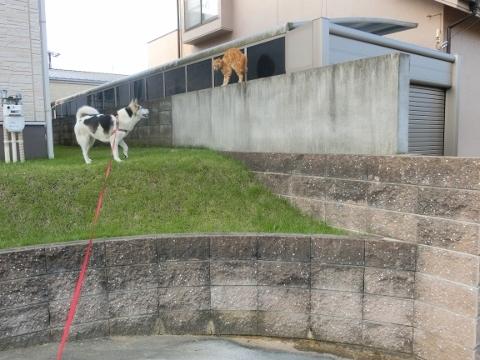 2017-07-13 散歩 猫 014 (480x360)