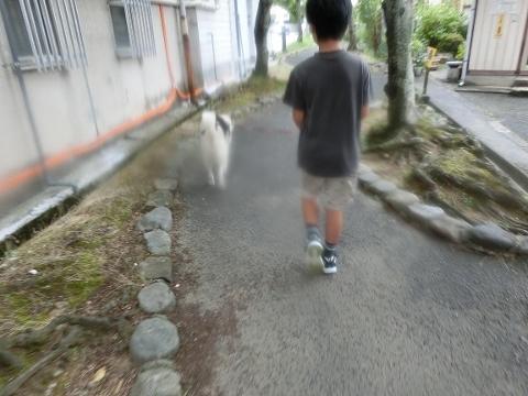 2017-07-15 散歩 001 (480x360)