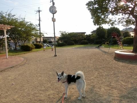 2017-07-18 散歩 004 (480x360)