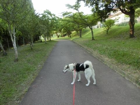 2017-07-18 散歩 015 (480x360)