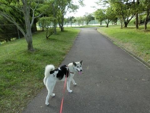 2017-07-18 散歩 016 (480x360)