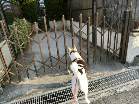 2017-07-20 散歩 003 (480x360)
