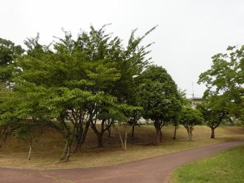 2017-07-24 散歩 008 (480x360)