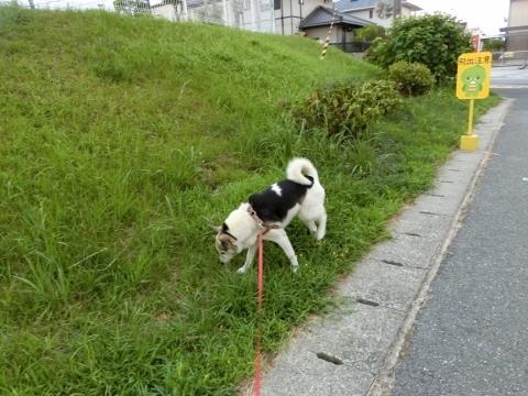 2017-08-26 散歩 004 (480x360)