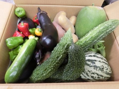 2017-08-27 野菜 002 (480x360)