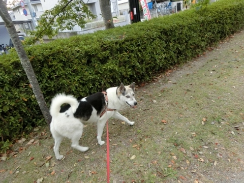 2017-09-03 散歩 003 (480x360)