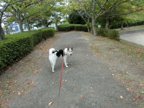 2017-09-03 散歩 007 (480x360)