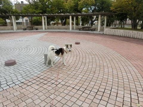 2017-09-17 散歩 006 (480x360)