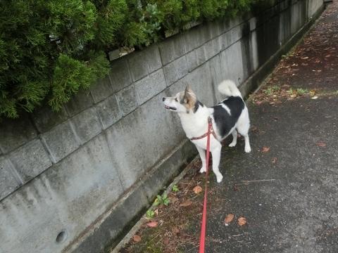 2017-09-17 散歩 010 (480x360)