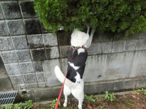 2017-09-17 散歩 011 (480x360)